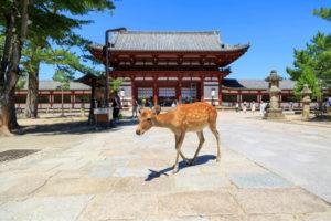 奈良の占い15選!よく当たる人気の占い師や口コミ評判もご紹介!