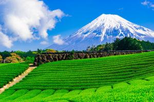 静岡でよく当たる人気の占い14選!おすすめ占い師や口コミ評判もご紹介!