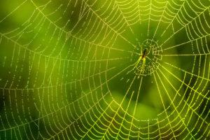 蜘蛛のスピリチュアルな意味とは?朝は縁起が良くて夜は不吉?