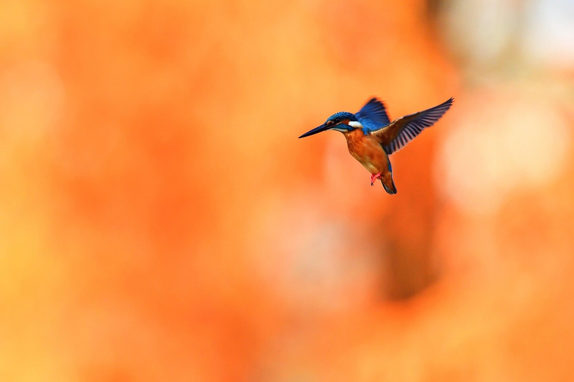【スピリチュアルメッセージ】鳥にはどんな意味があるの?夜の鳴き声には・・・