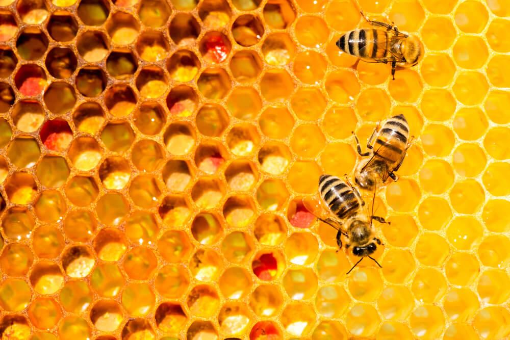 蜂のスピリチュアル的な意味とは?蜂に刺される夢を見たら・・・