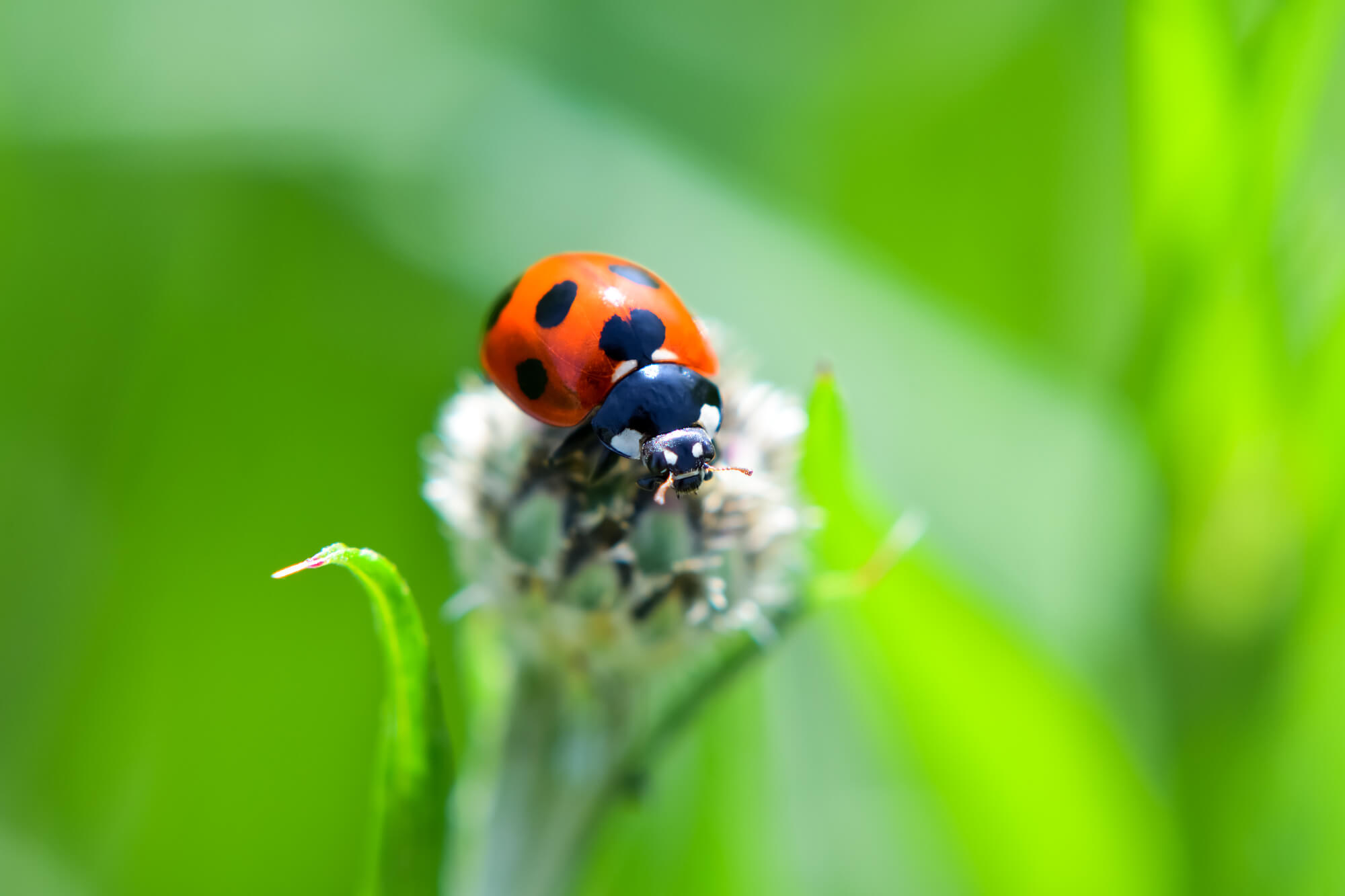 てんとう虫のスピリチュアルな意味は幸運のシンボル!