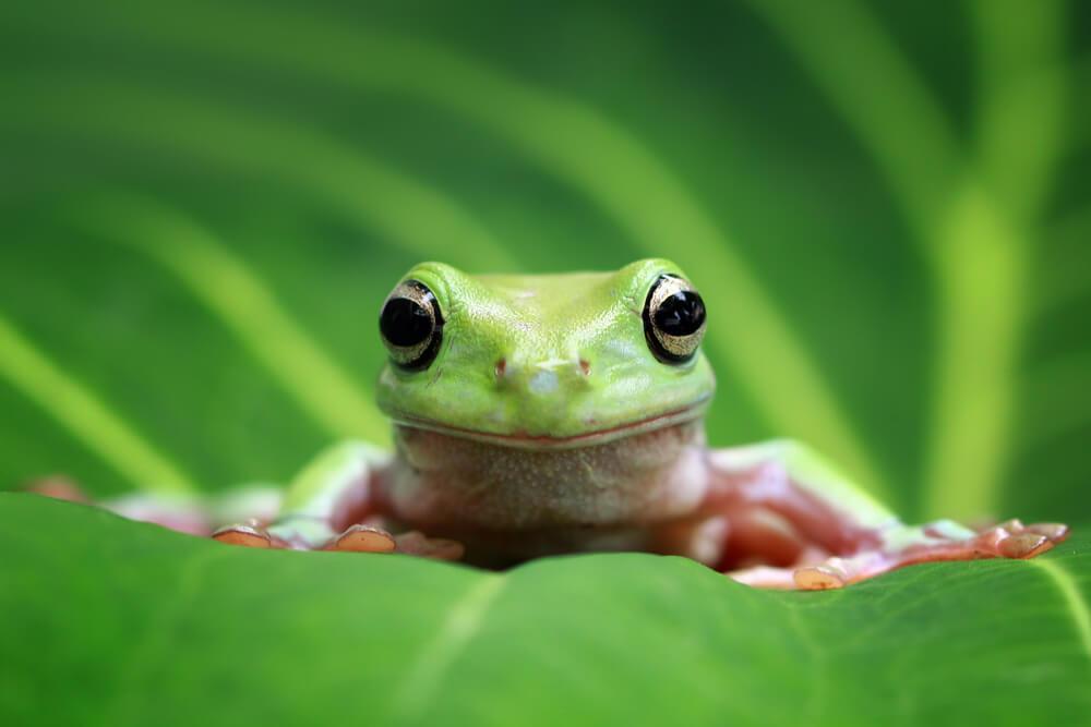 カエルのスピリチュアルなメッセージは?カエルは幸運の象徴で縁起がいい?