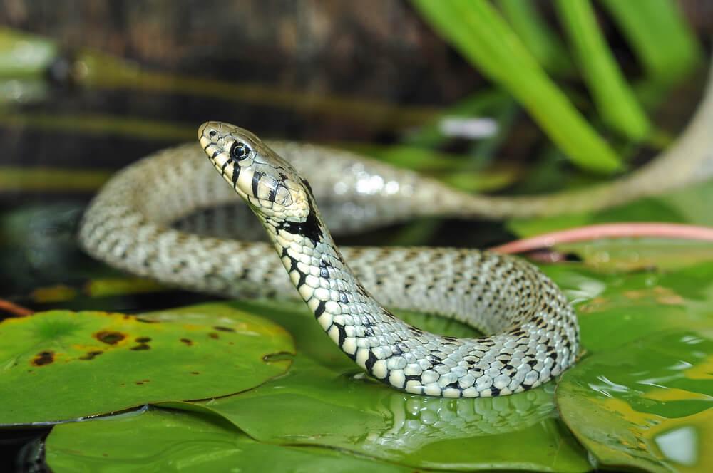 蛇のスピリチュアルな意味とは?蛇が夢にでてきたら幸運のメッセージ?