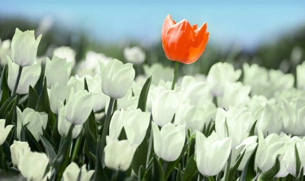 【色別】チューリップの花言葉