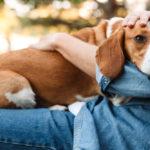 スピリチュアル的に見る犬との関係は?ペットとして飼うことの意味は?好かれる人吠えられる人の特徴は?