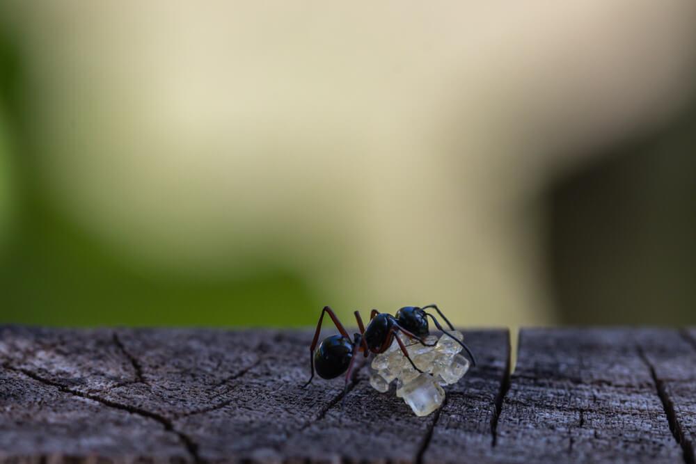 蟻のスピリチュアルな意味やメッセージとは?行列が象徴するものは?大量発生の暗示は?