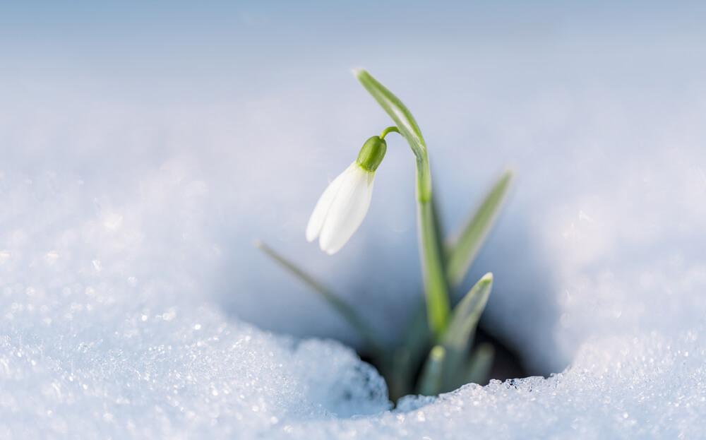 1月1日生まれの誕生花が→コレ!性格や恋愛・仕事などの誕生日占いもご紹介!