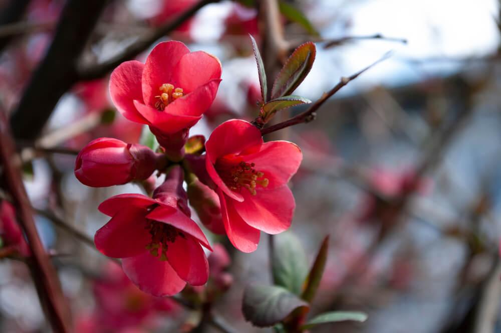 【2月の誕生花一覧】2月の誕生花・花言葉をご紹介!