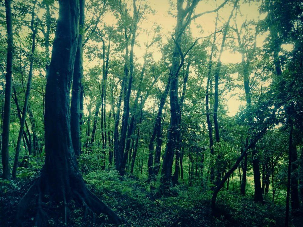 木霊(こだま)の意味とは?樹木に宿る精霊って?木霊の姿は?
