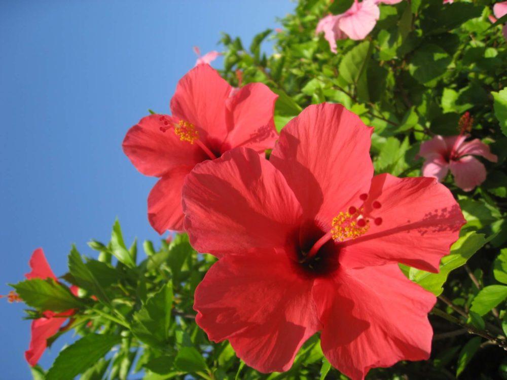 7月11日生まれの誕生花と花言葉がコレ!性格や恋愛・仕事などの誕生日占いもご紹介!