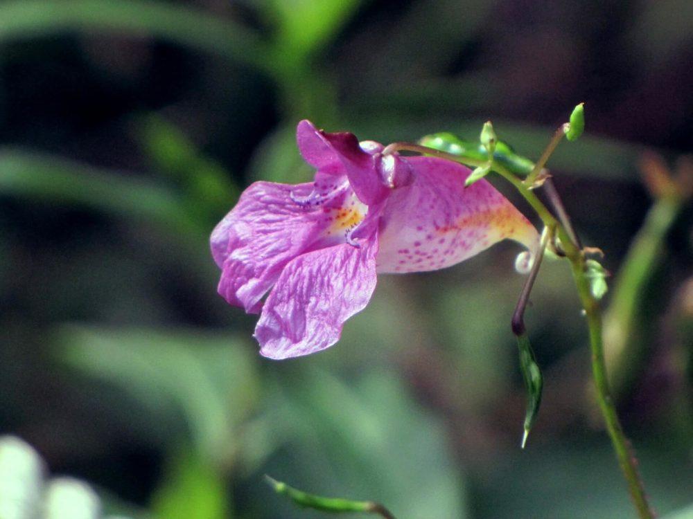 9月19日生まれの誕生花と花言葉がコレ!性格や恋愛・仕事などの誕生日占いもご紹介!