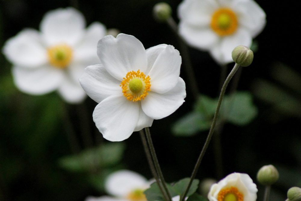 9月30日生まれの誕生花と花言葉がコレ!性格や恋愛・仕事などの誕生日占いもご紹介!