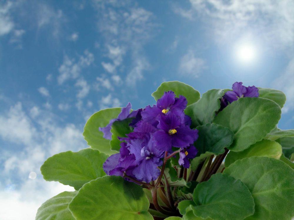 11月24日生まれの誕生花と花言葉がコレ!性格や恋愛・仕事などの誕生日占いもご紹介!