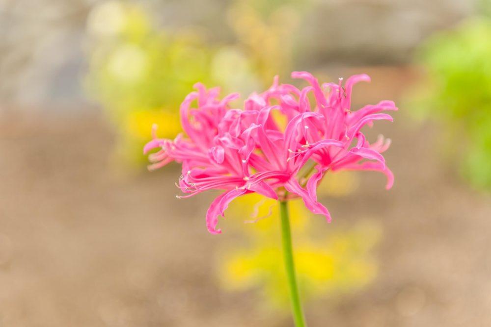 10月13日生まれの誕生花と花言葉がコレ!性格や恋愛・仕事などの誕生日占いもご紹介!