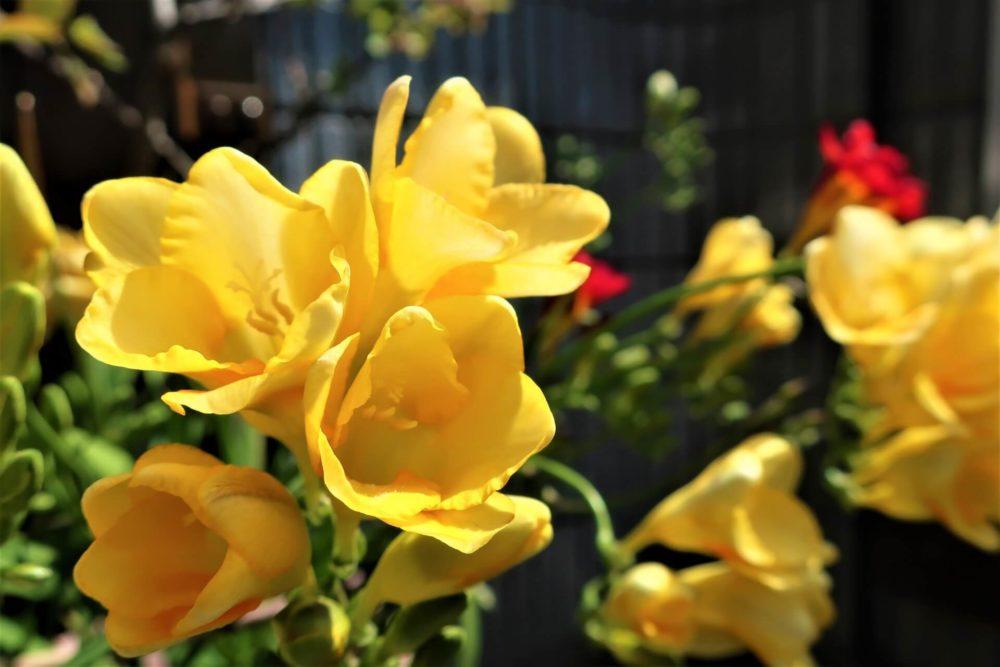 12月17日生まれの誕生花と花言葉がコレ!性格や恋愛・仕事などの誕生日占いもご紹介!