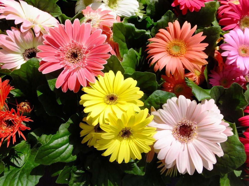 10月12日生まれの誕生花と花言葉がコレ!性格や恋愛・仕事などの誕生日占いもご紹介!