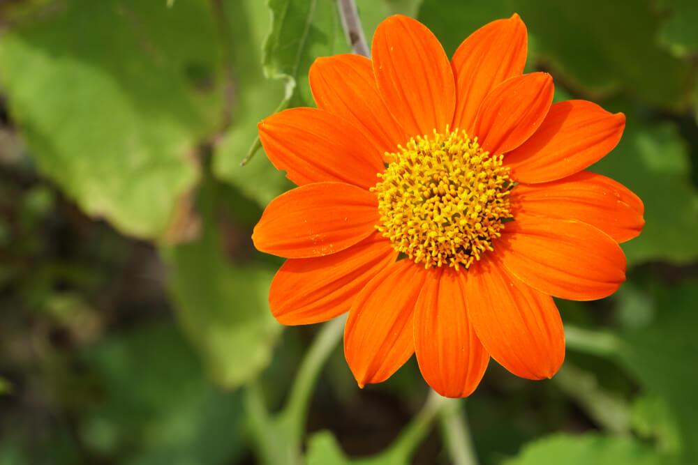 9月29日生まれの誕生花と花言葉がコレ!性格や恋愛・仕事などの誕生日占いもご紹介!