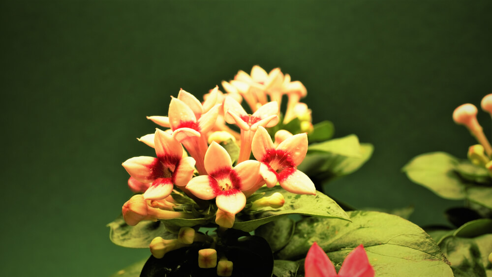 10月10日生まれの誕生花と花言葉がコレ!性格や恋愛・仕事などの誕生日占いもご紹介!